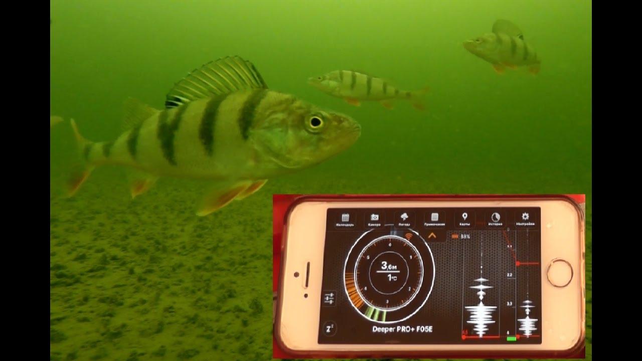 Для того чтобы купить эхолот эхолот deeper smart fishfinder, эхолот deeper вам достаточно нажать на кнопку купить сейчас сверху справа, и заполнить форму. Беспроводной портативный эхолот deeper для ios/android или как его ещё называют bluetooth эхолот deeper smart fishfinder это умный эхолот,