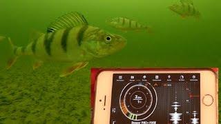 Обзор и реальный тест эхолота диппер Deeper Sonar Pro Plus на рыбалке  Подводные съемки