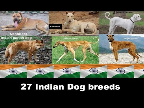 Indian dog breeds (A to Z)