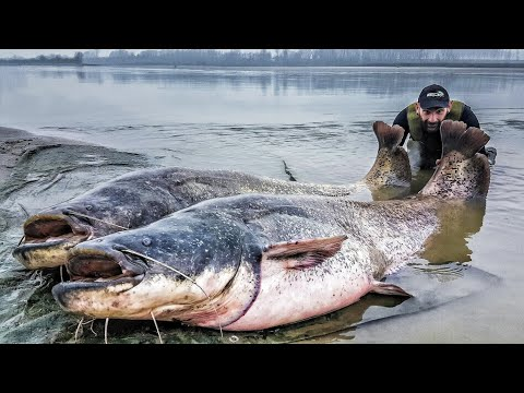 One of the biggest catfish ever caught! from YouTube · Duration:  3 minutes 6 seconds  · 25,000+ views · uploaded on 9/10/2008 · uploaded by AndiLea16