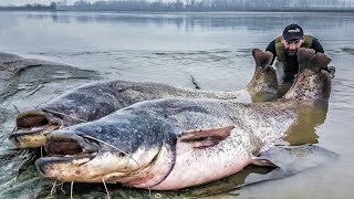 BIGGEST FISH EVER CAUGHT TWO MONSTER'S CATFISH 265 LBS  - HD by CATFISHING WORLD