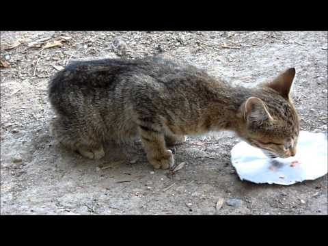 Abandoned cat rescue - Lucky Kitty, a chance at life. Rescued by Howl Of A Dog