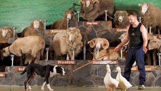 Agrodome Rotorua - The Farm Show Dog Trials
