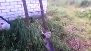 Кошка преодолевая трудности тащит котенка домой.
