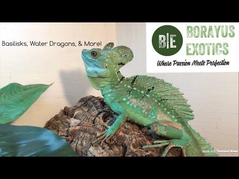 Borayus Exotics & Their AMAZING Collection!