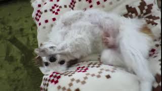 愛犬のうごうごダンス thumbnail