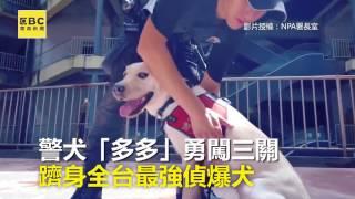 câine labrador antrenat pentru detectarea explozivilor