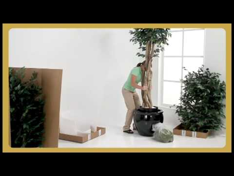 large silk ficus trees commercial artificial tree setup