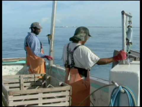 Commercial fishing in the florida keys part 2 youtube for What is commercial fishing