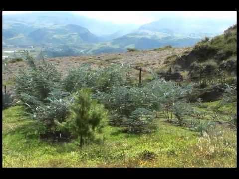 Ecuador Crece con sus Bosques 1 3  YouTube