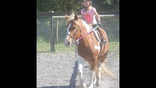Toddler Proof Beginner Short Stirrup pony for off farm lease $4500 yr/