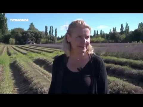 26895 agriculture Mittelstand 002 001 TV5 Monde Intégrale Epicerie fine ׃ Lavande et Picodins de la
