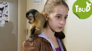 Affenschande (Folge 24) | Tiere bis unters Dach | SWR Kindernetz