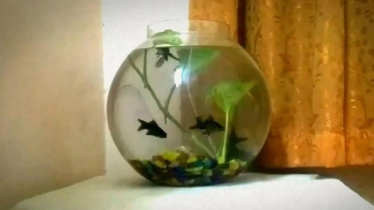 2 5 gallon fish bowl setup and betta collection youtube for 2 gallon fish bowl