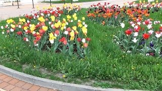 Tulips in front of the Romanian Parliament - Bucharest, Romania in 3D 4K UHD