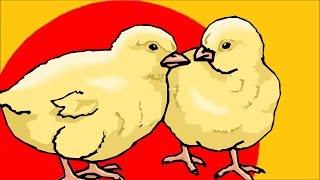 Free Range Chicken Label Lies With Matt Rice