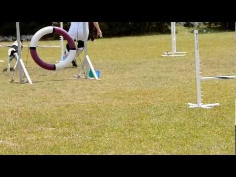 Dog Agility, Ag Show, Apr 20 2012