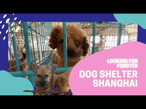 Dog Shelter Shanghai Animal Rescue Station SAVE THE LIFE OF THE DOGS , looking for Forster new owner