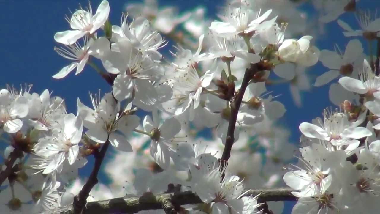spring england