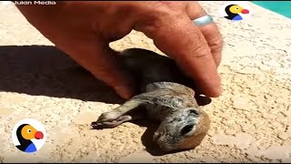 Drowning Prairie Dog Rescued by Guy | The Dodo thumbnail