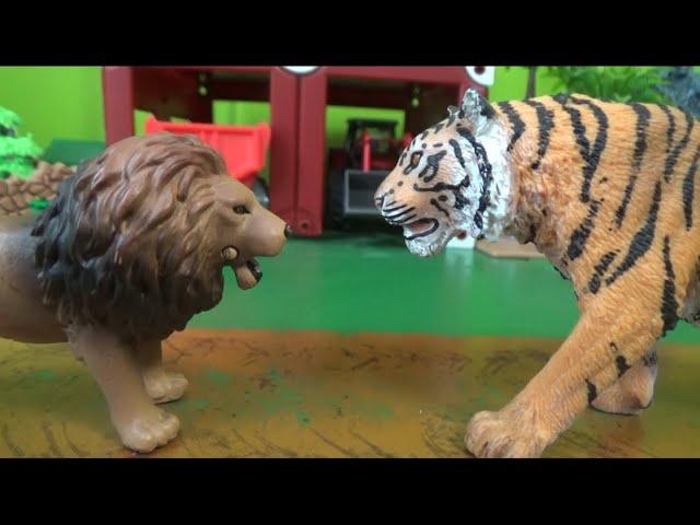 사자 vs 호랑이 대결 Lion vs Tiger Battle