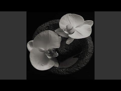 Corpse Flower Mp3