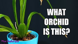How to identify Orchids without flowers - A simple guide for beginners!