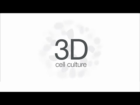 3D Cell Culture and Thermo Fisher Scientific: We're Growing With You