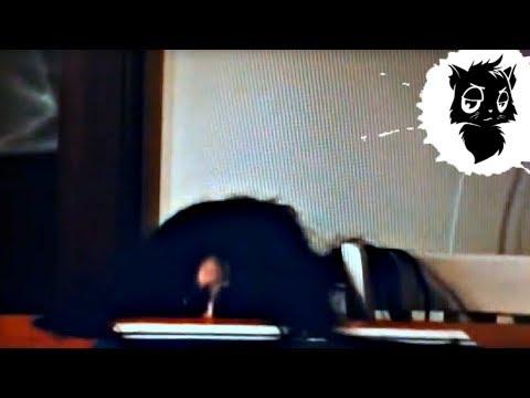 5 МОНСТРОВ ИЗ ЯПОНИИ СНЯТЫХ НА КАМЕРУ [Черный кот]