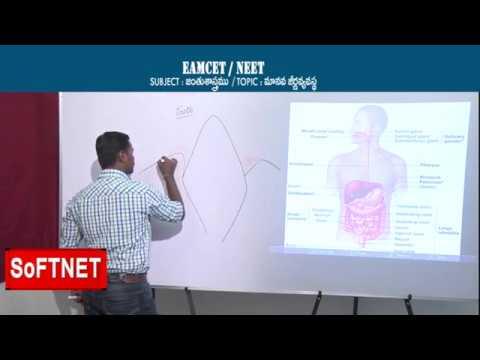 ZOOLOGY    Human Digestive System - P1    CH.Praveen Kumar