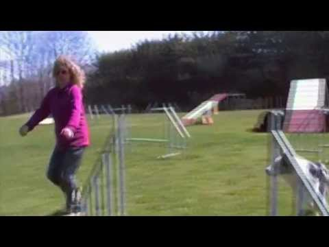 agility dog i'm on fire di petrademone border collie.m4v