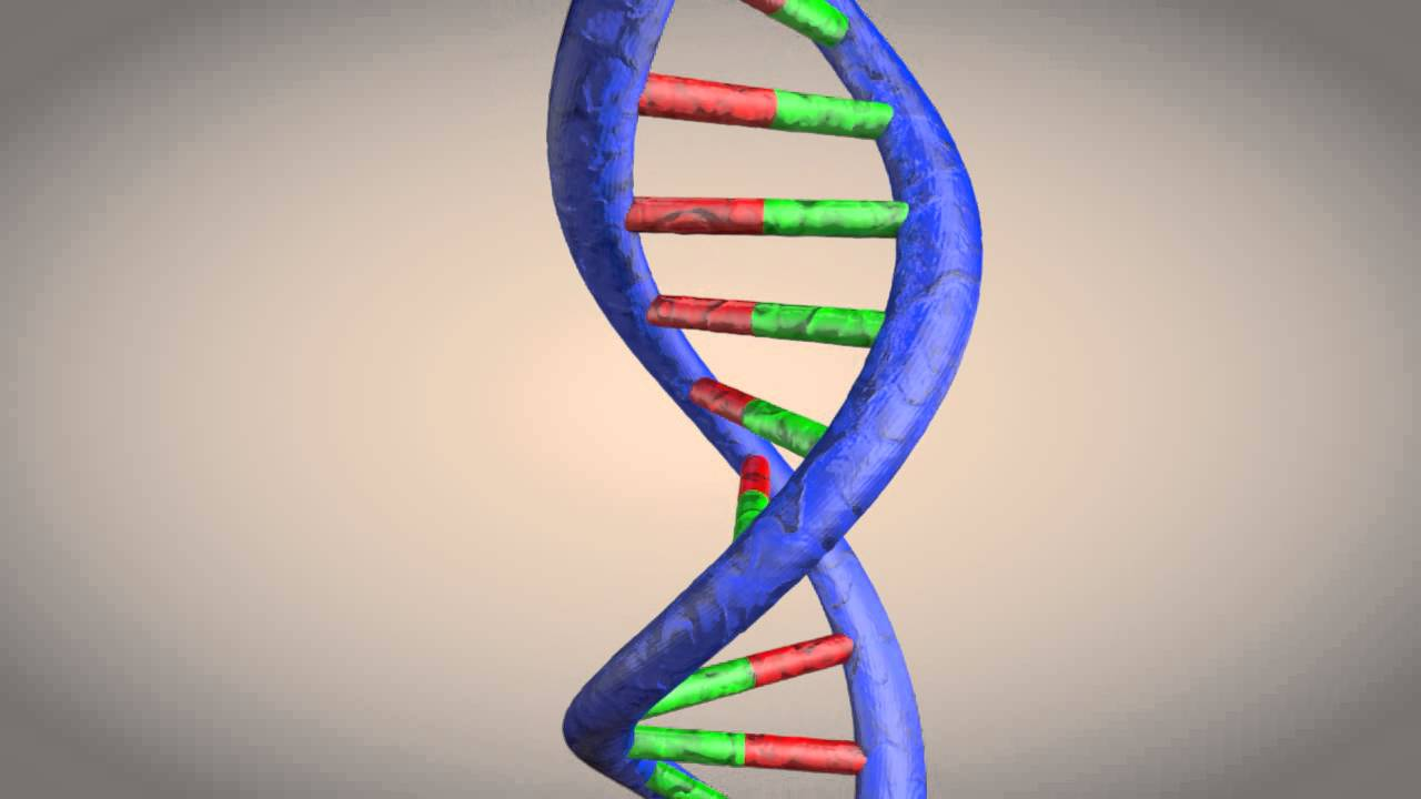 DNA double helix structure animation - YouTube