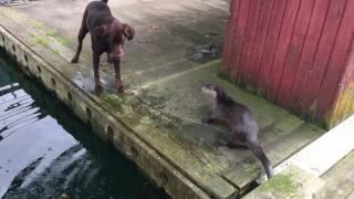 2匹のラブラドール・レトリバー、港で異種のお友達ときゃっきゃうふふ