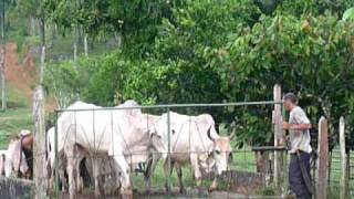 20081230 vaches