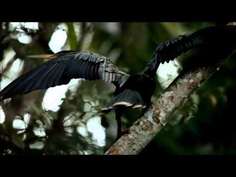 Your Ecuadorian Amazon Rainforest Experience (EntireVersion)