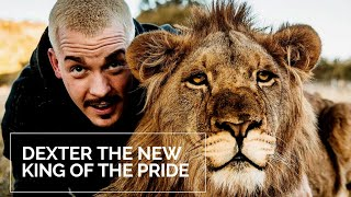 DEXTER IS THE NEW KING OF LION PRIDE