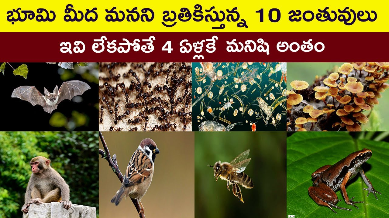 Top 10 Animals that Humans Need to Survive | Facts About Animals in Telugu