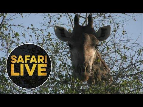safariLIVE - Sunrise Safari - June 18, 2018