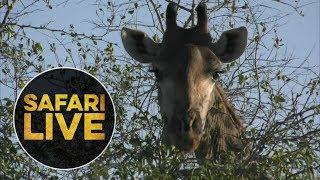 safariLIVE - Sunrise Safari - 2018, 18. June