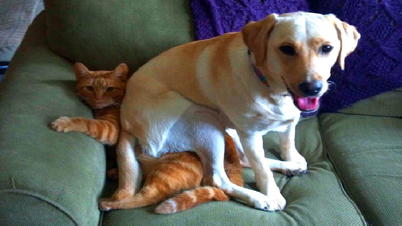 Perfect place. Perhaps I'll sit down here ??? #animals #pets #funny