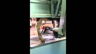 Robotic milker start-up: Day 1 at Ingleside Dairy Farm in Virginia