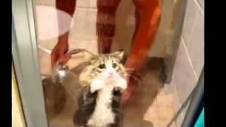 Приколы коты фотки