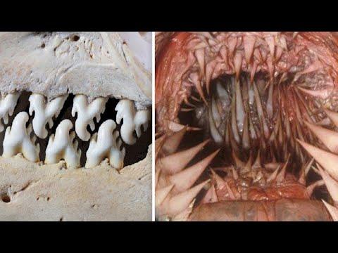 13 Tiere mit den furchterregendsten Zähnen!
