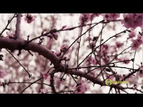 DRJ Organics Product Video HD