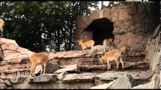 Познавательный фильм: Московский зоопарк: кормить разрешается