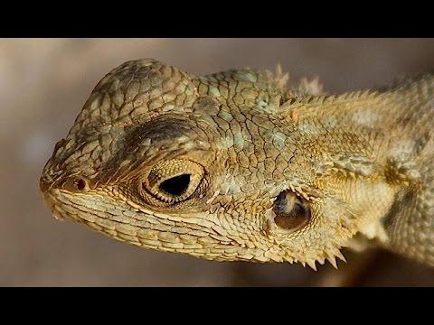 Lizards ~ Reptile Documentary
