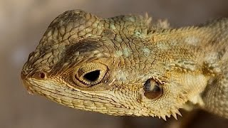 Lizards ~ Reptile Documentary