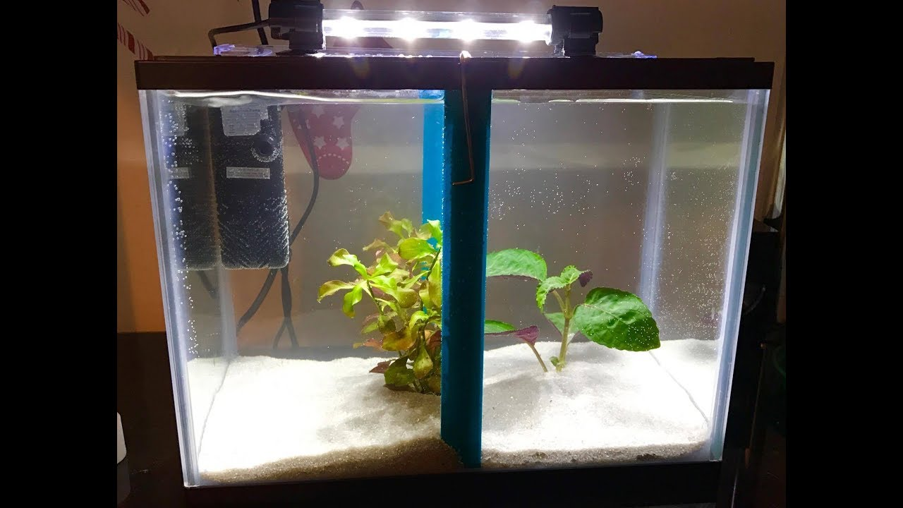 How To Install An Aquarium Divider Separate Sick Or Rough Fishes