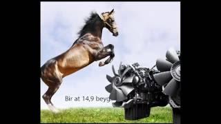 Atları Sevin : Atlar Hakkında Bilmedikleriniz #5