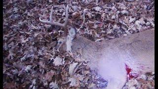 Iowa Deer Hunting Season Public Land Buck Harvest